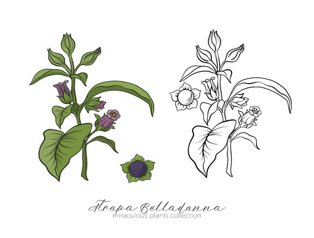 Belladonna plant set. Colored and outline set stock vector illus.