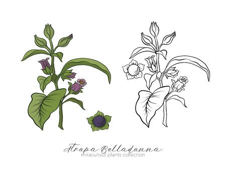 Belladonna plantenset. Gekleurde en overzichts vastgestelde voorraad vectorillus.