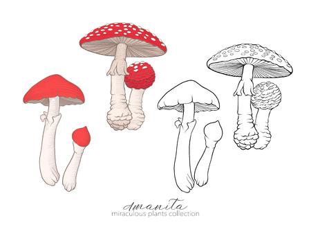 Miraculous plant. Amanita mushroom. Vectores