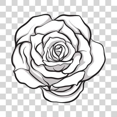 孤立した輪郭が花をバラ。ストックラインベクトルイラスト。  イラスト・ベクター素材