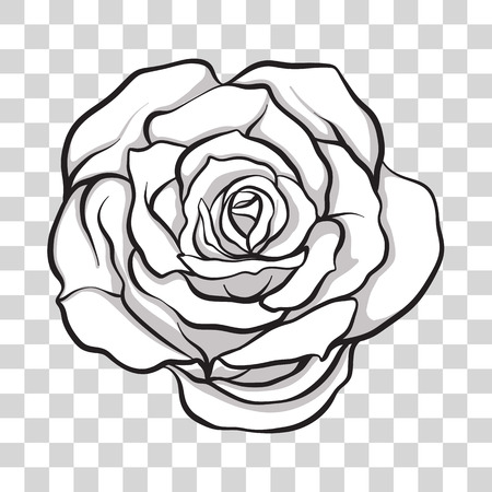 Isolated outline rose flower. Stock line vector illustration.