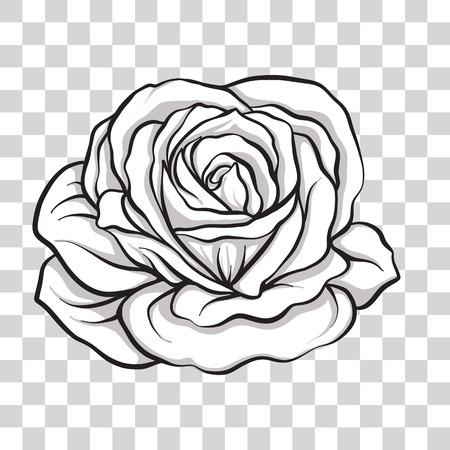Isolated outline rose flower. Stock vector illustration. Illustration