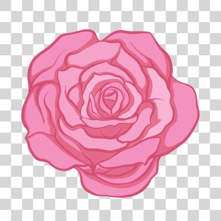 Isolated pink rose flower. Stock vector illustration. Illustration
