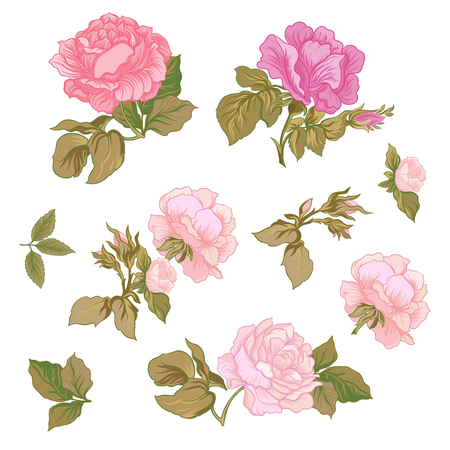 Rose Flowers. Stock line vector illustration botanic flowers.