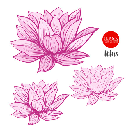 Lotus flowers. Stock line vector illustration botanic flowers.