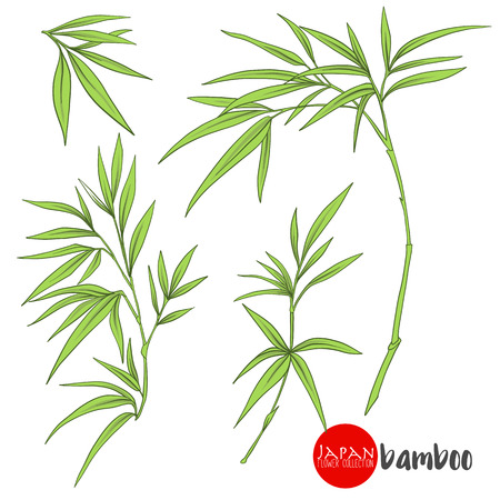 bamboo branch. Stock line vector illustration botanic flowers.