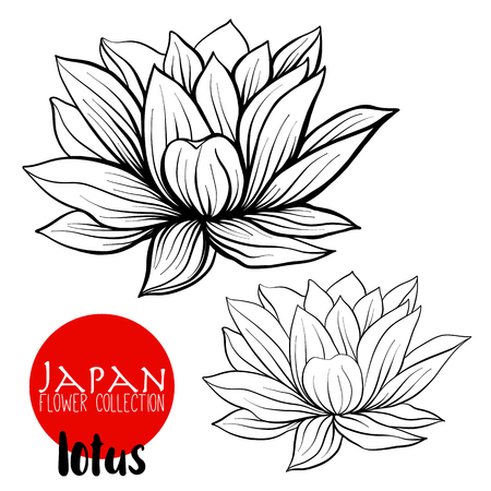 Lotus flowers. Stock line vector illustration botanic flowers. Outline drawing.