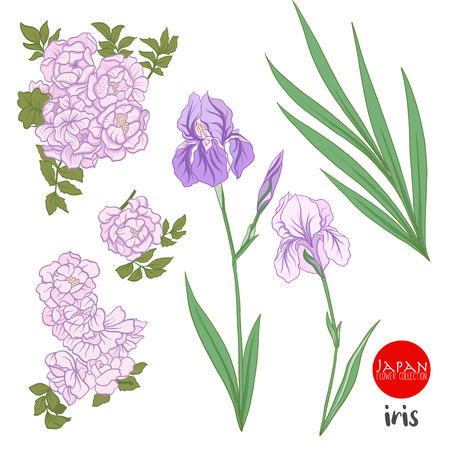 Iris and wild rose flowers. Stock line vector illustration botanic flowers.