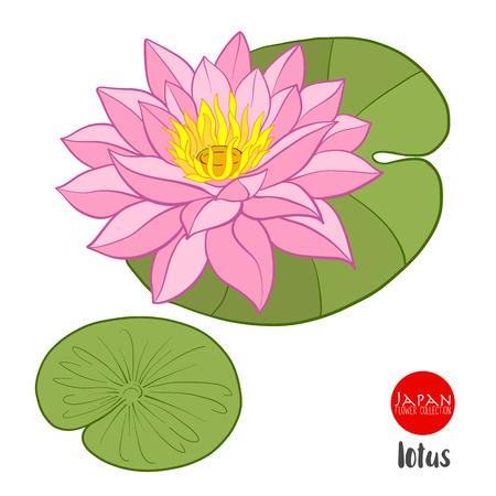 로터스 꽃입니다. 주식 라인 벡터 일러스트 레이 션 식물 꽃.