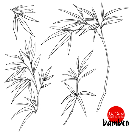 bamboo branch. Stock line vector illustration botanic flowers. Outline drawing. Çizim
