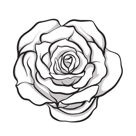 Rose flower isolated outline hand drawn. Stock line vector illustration. 向量圖像