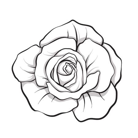 バラの花を分離したアウトラインの手描き。ストック ライン ベクトル イラスト。