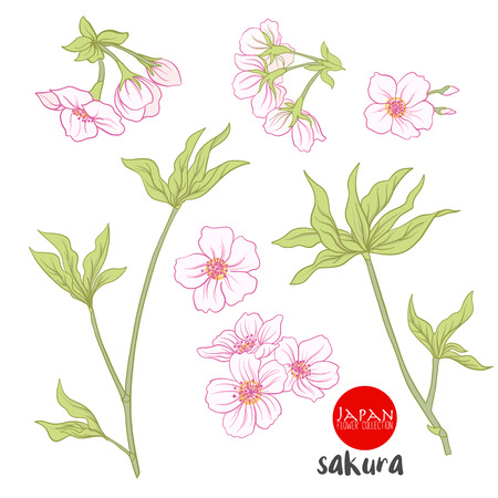 Branch of cherry blossoms, japanese cherry. Stock line vector illustration botanic flowers.