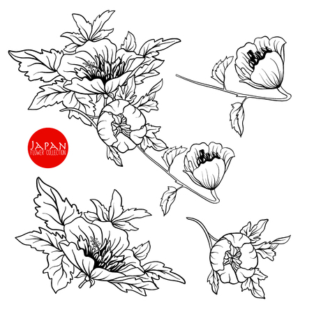 Flowers on branch. Stock line vector illustration botanic flowers. Outline drawing. Illustration