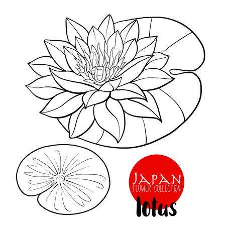 Lotus flowers. Stock line vector illustration botanic flowers. Outline drawing.