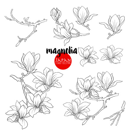 Branch of magnolia blossoms. Stock line vector illustration botanic flowers. Outline drawing. Illusztráció