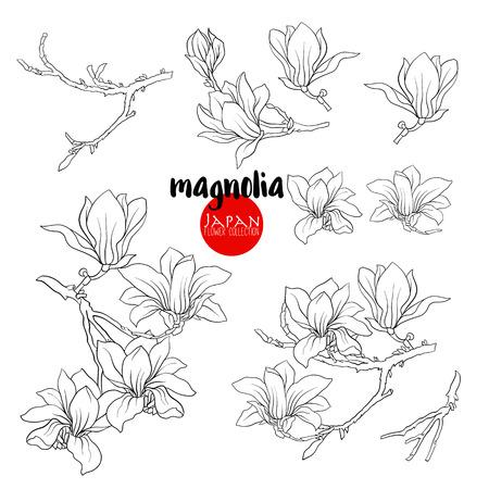 Branch of magnolia blossoms. Stock line vector illustration botanic flowers. Outline drawing. Illustration