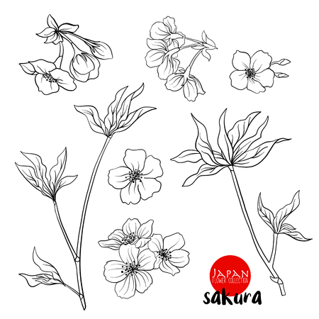 Branch of cherry blossoms, japanese cherry. Stock line vector illustration botanic flowers. Outline drawing.