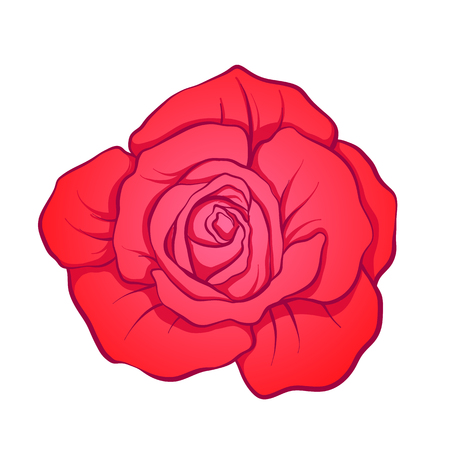 rose tattoo: Red rose flower isolated hand drawn. Stock line vector illustration.