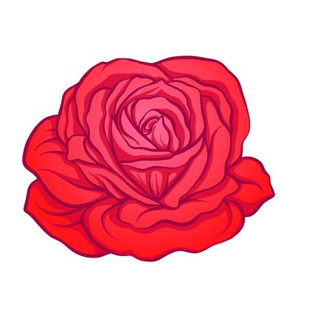 Red rose flower isolated hand drawn. Stock line vector illustration.   Illustration
