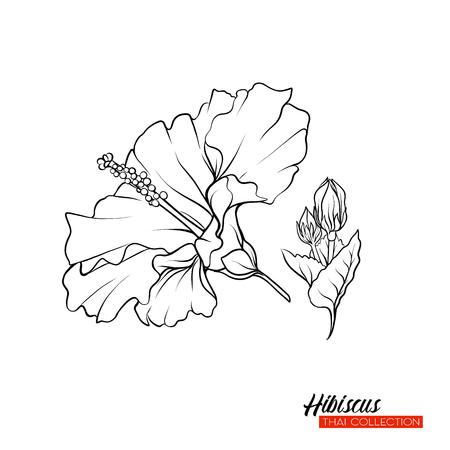 Hibiscus flower. Botanical illustration style. Stock vector outline illustration