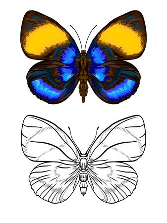 Conjunto de imágenes de color y contorno de una mariposa. Ilustración de vector colorido dibujado a mano sin transparentes y degradados.