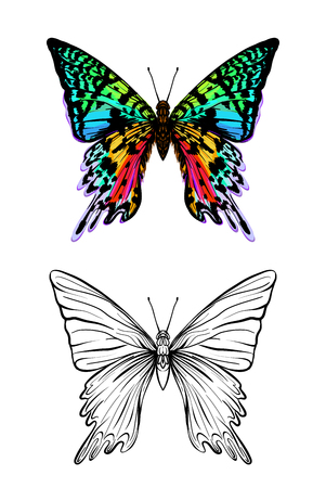 Set of color and outline images of a butterfly. Hand drawn colorful vector illustration without transparent and gradients.