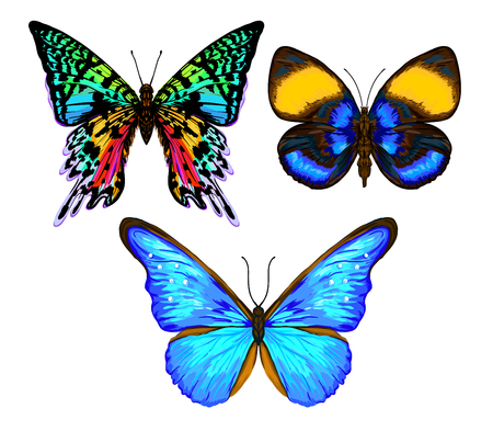 Set of color images of a butterfly. Hand drawn colorful vector illustration without transparent and gradients. Illustration