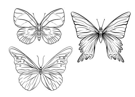 Conjunto de imágenes de contorno de una mariposa. Dibujo de esquema. Ilustración vectorial de stock.