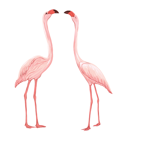 Beautiful hand drawn vector illustration with flamingo. Isolated on white background. Colorful vector illustration without transparent and gradients. Ilustración de vector