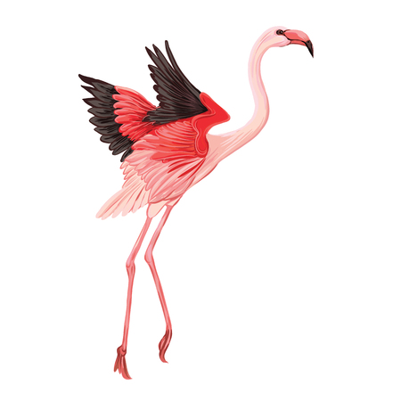 Beautiful hand drawn  vector illustration with flamingo. Isolated on white background. Colorful vector illustration without transparent and gradients.