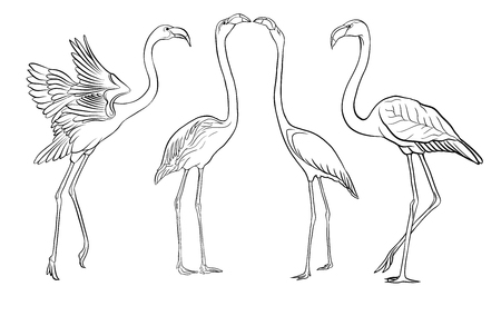 Beautiful hand drawn outline vector illustration with flamingo. Isolated on white background.