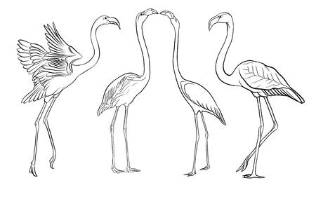 Schöne Hand gezeichnete Umrissvektorillustration mit Flamingo. Auf weißem Hintergrund isoliert.