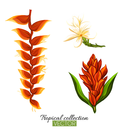 Beautiful hand drawn botanical vector illustration with strelitzia flower. Isolated on white background. Colorful vector illustration without transparent and gradients.
