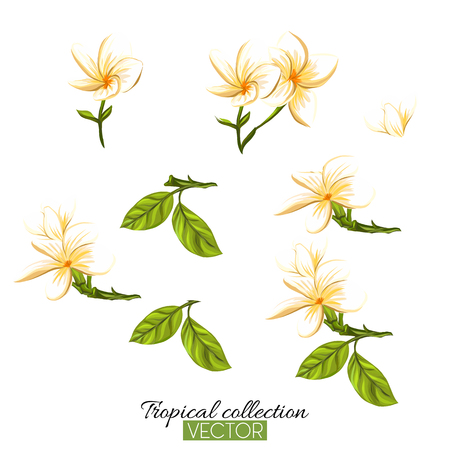 Beautiful hand drawn botanical vector illustration with tropical plumeria. Isolated on white background. Colorful vector illustration without transparent and gradients. Stock Vector - 111754911