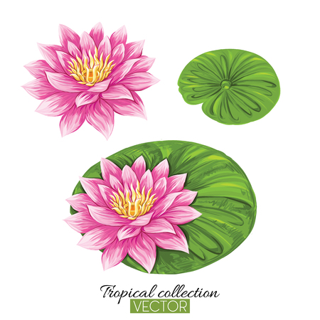Beautiful hand drawn botanical vector illustration with lotus fl