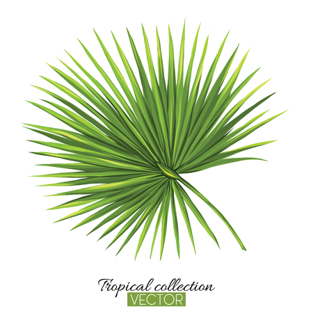 Beautiful hand drawn botanical vector illustration with palm. Isolated on white background. Colorful vector illustration without transparent and gradients. Illustration