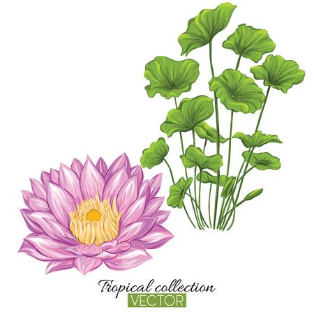 Beautiful hand drawn botanical vector illustration with lotus fl