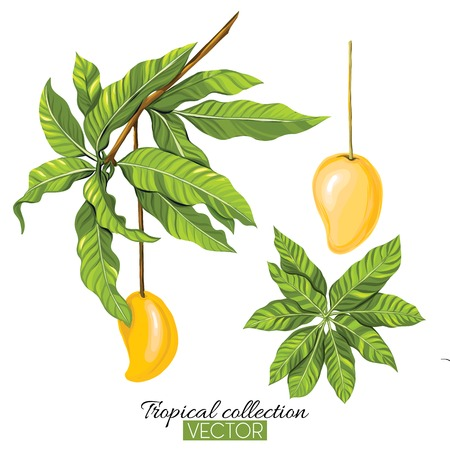 Tropical plant collection vector illustration isolated on white Illustration