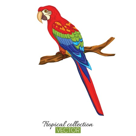 Papuga. Kolorowa ilustracja wektorowa bez przezroczystego