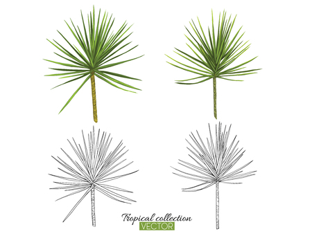 Beautiful hand drawn botanical vector illustration with palm. Set of color and outline images Isolated on white background. Colorful vector illustration without transparent and gradients.