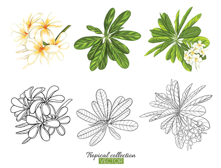 Beautiful hand drawn botanical vector illustration with tropical plumeria. Set of color and outline images Isolated on white background. Colorful vector illustration without transparent and gradients. Stock Vector - 111754931