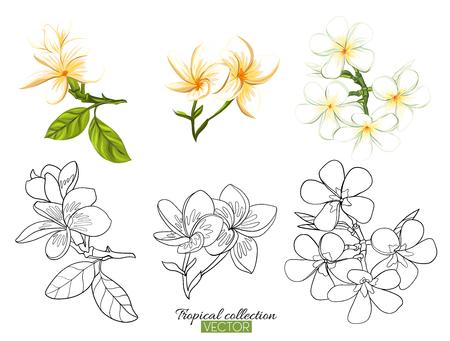 Belle illustration vectorielle botanique dessinés à la main avec plumeria tropical. Ensemble d'images de couleur et de contour isolé sur fond blanc. Illustration vectorielle colorée sans transparent et dégradés.