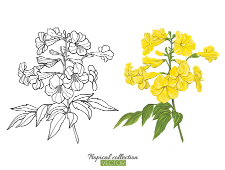 Beautiful hand drawn botanical vector illustration with yellow tropical flower. Set of color and outline images. Isolated on white background. Colorful vector illustration without gradients.