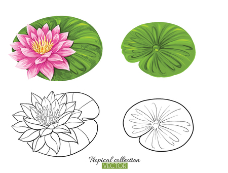 Tropical plant collection vector illustration isolated on white  イラスト・ベクター素材