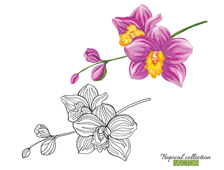 Beautiful hand drawn botanical vector illustration with orchid. Set of color and outline images Isolated on white background. Colorful vector illustration without transparent and gradients.