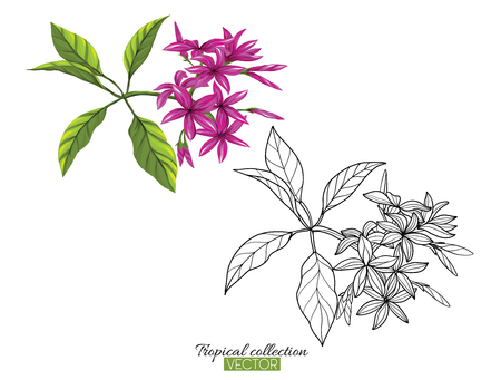 Beautiful hand drawn botanical vector illustration with tropical plumeria. Set of color and outline images Isolated on white background. Colorful vector illustration without transparent and gradients.