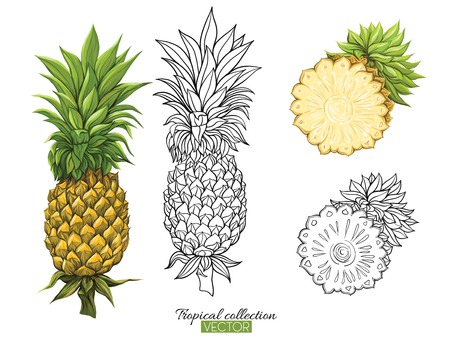 Bella illustrazione vettoriale botanico disegnato a mano con ananas. Set di immagini a colori e contorno. Isolato su sfondo bianco. Illustrazione vettoriale colorato senza trasparenti e sfumature.