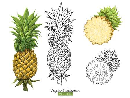 Ilustración de vector botánico dibujado a mano hermosa con piña. Conjunto de imágenes en color y contorno. Aislado sobre fondo blanco. Ilustración de vector colorido sin transparentes y degradados.
