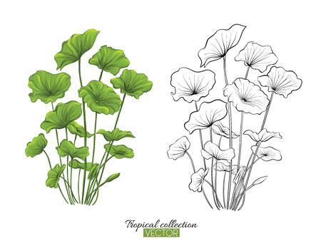 Ilustración de vector de colección de plantas tropicales aislado en blanco Ilustración de vector